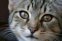 Katzenkind liebt dich von Angelika Thomson