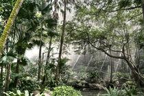 Die Wand im Dschungel von Kai Kasprzyk