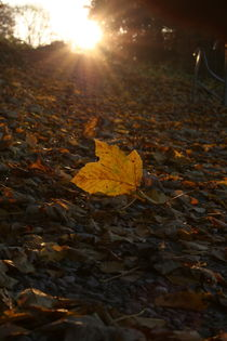 Abendspaziergang im Herbst by Angelika Thomson