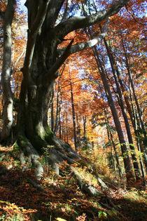 Spektakulärer Herbstwald 1 von Angelika Thomson