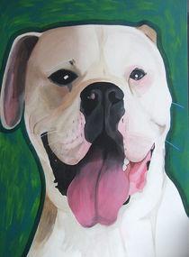 American Bulldog von roosalina