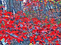 Red Oak Leaves by Mary Lee Parker