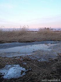 Oderwiesen unterm Eis von voelzis-augenblicke