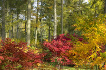 Autumn Arboretum von Rob Hawkins
