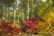 Autumn Arboretum by Rob Hawkins