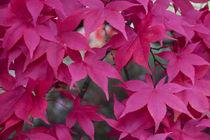 Autumn Reds  von Rob Hawkins