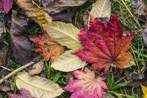 Leaf it out  von Rob Hawkins