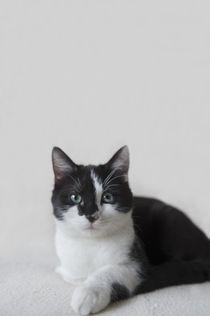 Kleine Katze / 20 by Heidi Bollich
