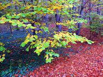 bunter Wald von Zarahzeta ®