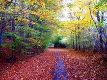 Herbstweg von Zarahzeta ®