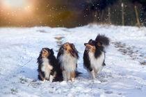 Let it snow von photoart-mrs