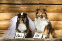Wedding Time Mr. & Mrs. von photoart-mrs