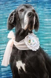 Great Dane Girl Black von photoart-mrs