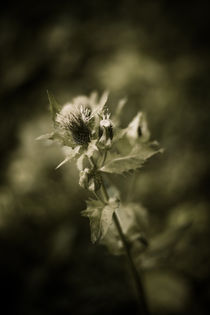 Flower by whiterabbitphoto