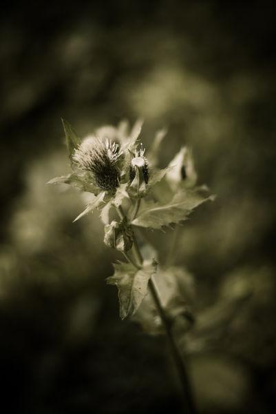 Flower-9095