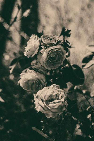 Flower2-2913