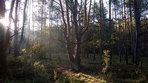 Lasy Spalskie 5 by Agata Szymanska