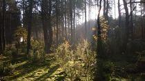 Lasy Spalskie 4 by Agata Szymanska