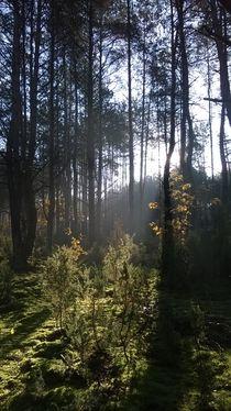 Lasy Spalskie 3 by Agata Szymanska