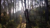 Lasy Spalskie by Agata Szymanska