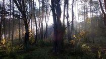 Lasy Spalskie 2 by Agata Szymanska