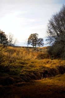 Trees in the Landscape by Photo-Art Gabi Lahl