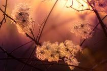 Abendsonne im November von photoart-mrs