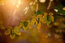 Autumn Love von photoart-mrs
