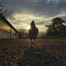 Huhn mit Sonnenuntergang, Lucky chicken von Ralf Schröer