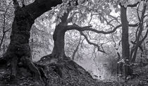 Gnarly Roots in B/W by Keld Bach