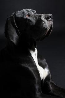 Rhapsody in Black von photoart-mrs