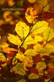 Herbstleuchten von photoart-mrs