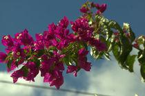 Auf die Blume gekommen by uta-behnfeld