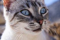 Lazer eyes von Jessy Libik
