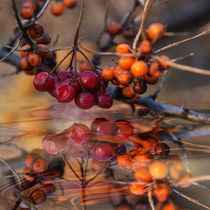 Over the water -Autumnal berry arrangement by Chris Berger