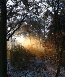 Ein Sonnenstrahl der anders scheint. by Simone Marsig