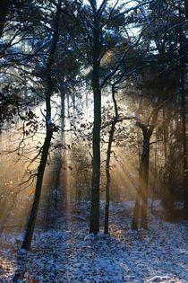 Wie Sonnenstrahlen durch Bäume glitzert.  von Simone Marsig