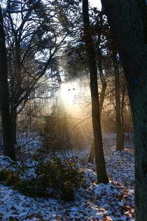 Im Sonnenstrahl ganz unheimlich zwei Augen blinzeln... von Simone Marsig