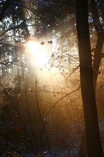 Herbstlaub in der Sonne strahlt. von Simone Marsig