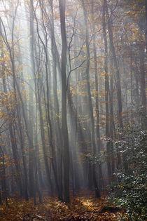 Die Sonne macht den Wald zum Dom von Hartmut Binder