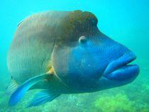 Tauchen im Reef von ann-foto