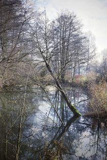 drowning tree by Photo-Art Gabi Lahl