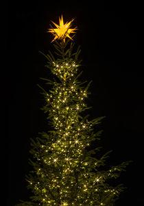 weihnachtsbaum von fotolos