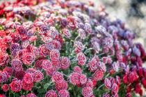 Flowers 999016 by Mario Fichtner