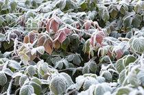 Der Winter ist gekommen by Iryna Mathes