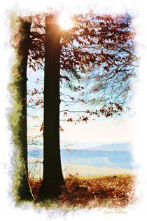 Contrasts Trees von Sandra  Vollmann