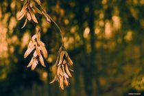 Pretty Details Forest  von Sandra  Vollmann