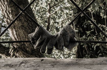 Gloves by Raymond Zoller