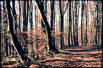 Forest Trail  von Sandra  Vollmann