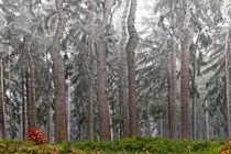 Baumwesen von Bernd Seydel